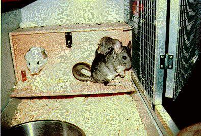 DIY-Chinchilla-Cage-3