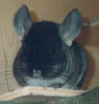 DIY-Chinchilla-Cage-