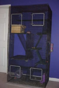 chinchilla-as-a-pet--cages-1